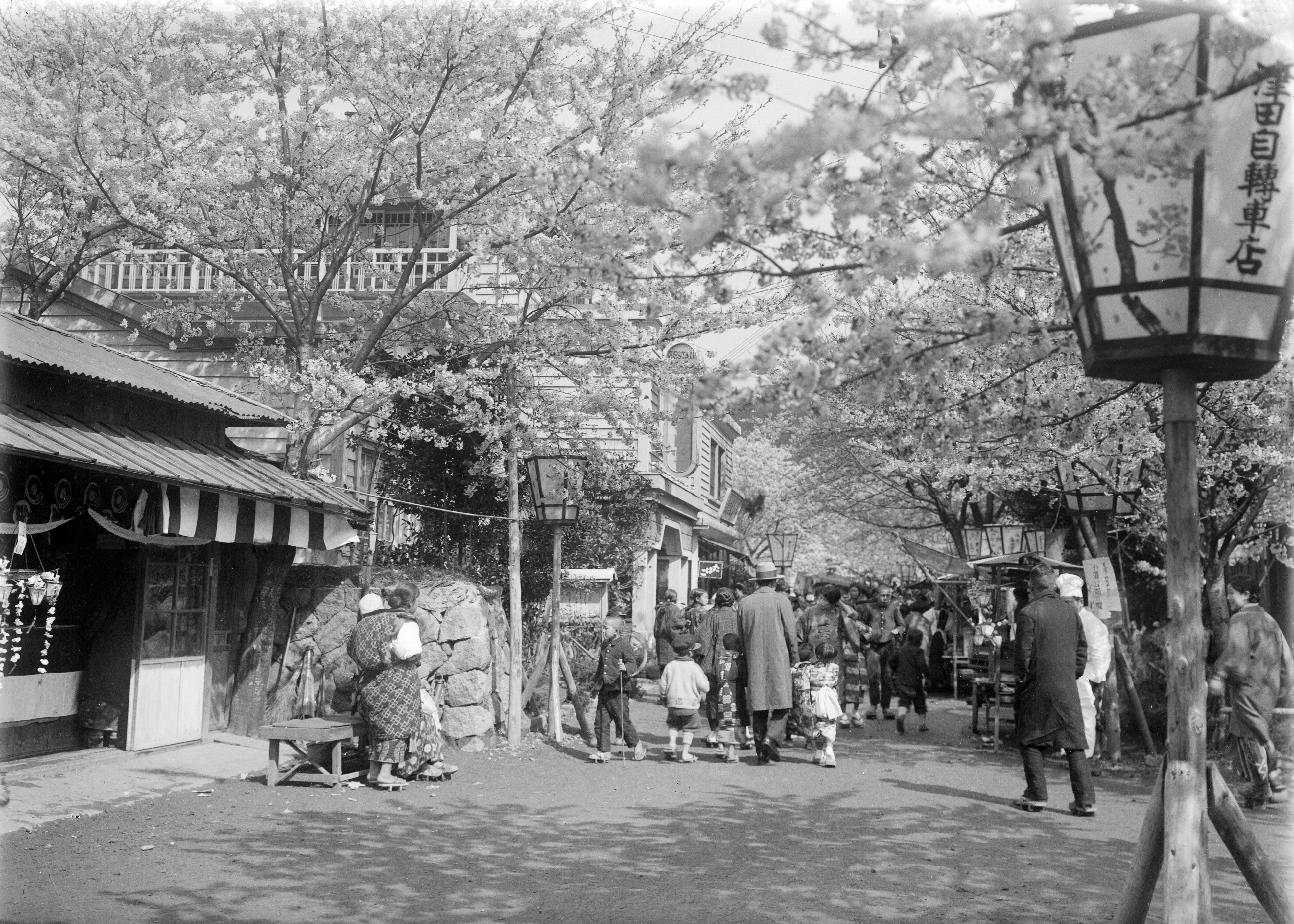 小浜公園の花見客(井田家所蔵古写真)