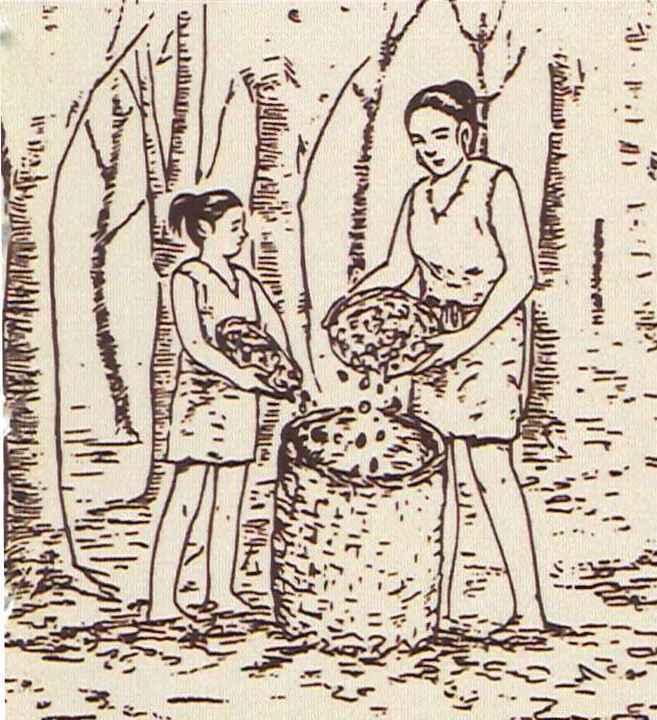 木の実の採取
