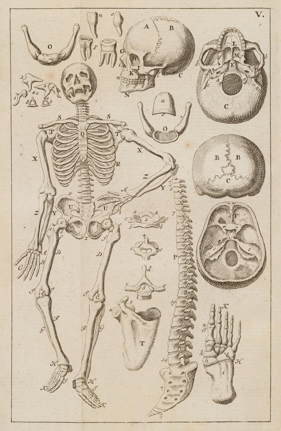『ターヘル・アナトミア』解剖図